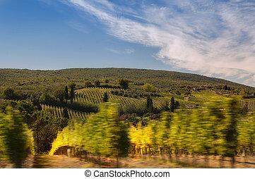 wine in tuscany, italy