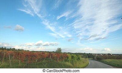wine land - time lapse vineyard in piedmont, Italy