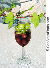 wine making - green young vine shoot with red wine glass...