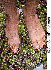 Mans feet squash hand-picked ripe red wine grapes during wine making process. Wine concept