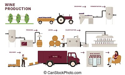 Wine production process stages, infographic cartoon modern winery factory processing line