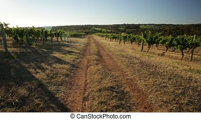 Wine Region Australia - Scenic panorama of a country road in...