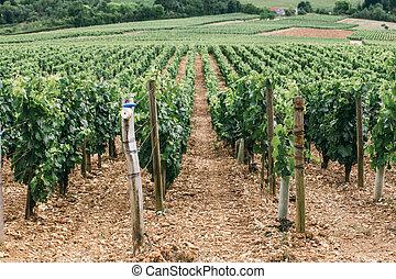 Wine region in france