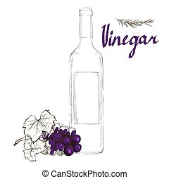 Wine vinegar in the bottle vector, outline. bunch of grapes...