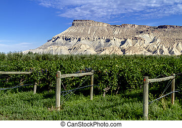 Wine Vineyards in Colorado River Valley - Colorado vineyard...