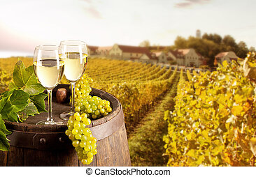 Wine with vineyard on background