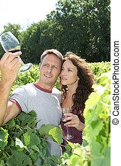 winegrowers, em, vinhedo