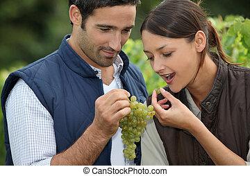 winegrowers, uvas, grupo