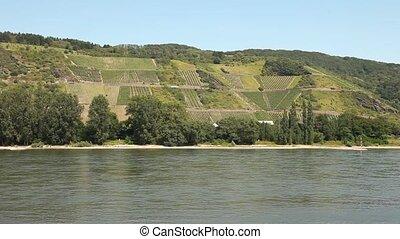 winegrowing, κοντά , ένα , ποτάμι , (rhine)