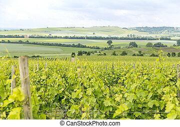 winegrowing around Loerzweiler - winegrowing scenery around ...