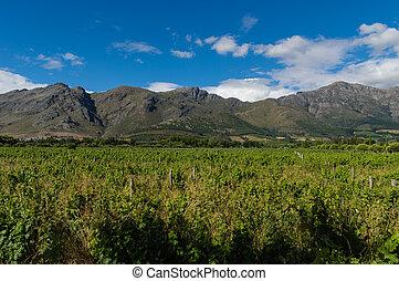 Franschhoek - Winelands Franschhoek, Capetown, South Africa