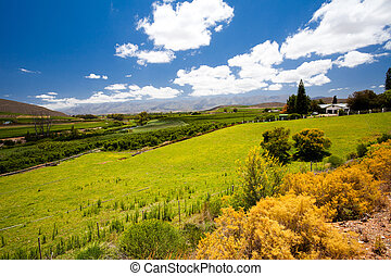 winelands landscape in Cape Town, South Africa