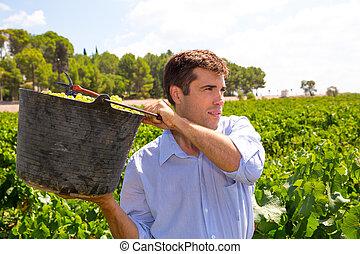 winemaker, granjero, chardonnay, cosechar, segador