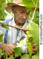 winemaker, personne agee