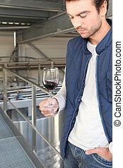 winemaker, plante