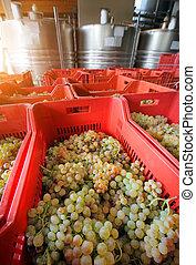 winemaking, raisins