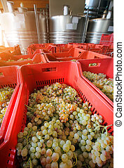 winemaking with grapes