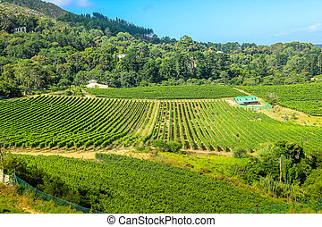 Winery aerial view