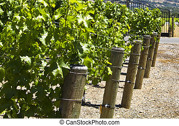 winery in the napa valley