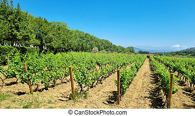 Winery in the South of France