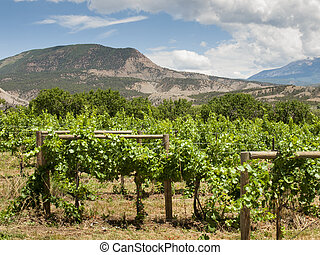 Local winery in Grand Junction, Colorado.