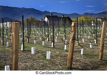 Winery New Vineyards  Napa California