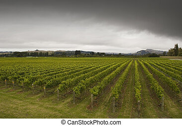Winery - Rainclouds roll over a vineyard in Hawke's Bay, New...