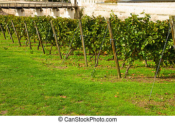 winery rows