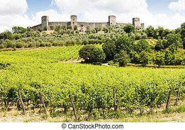 Wineyard in Tuscany - Monteriggioni, Tuscany region, Italy....