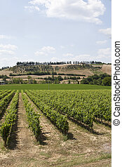 Wineyard - View from a wineyard