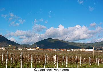 wineyards, alatt, ősz
