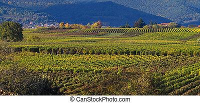 wineyards, em, outono
