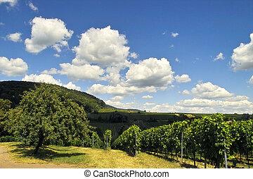 wineyards, em, verão