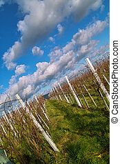 wineyards, in, autunno