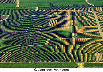 Summer wineyards on the south of Germany