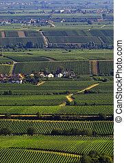 Wineyards in summer