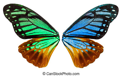 Wing of an butterfly