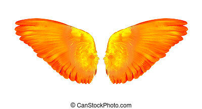 wing of birds on white background