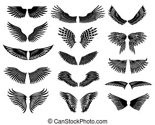 Wing set simple - Wings of real birds in nature. Vector...