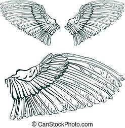 wing sketch