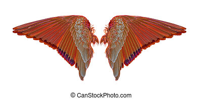 wings of birds on white background