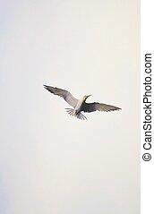 wings..., propageren, jouw