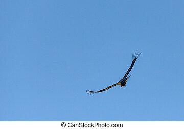 Wings Wide Open on Blue Sky