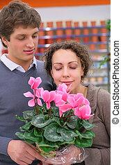 winkel, paar, pot, bloem