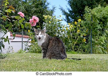 winking tabby cat on grass
