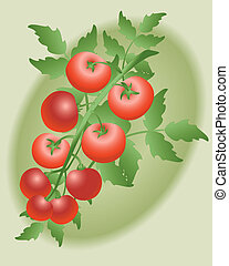 winne pomidory