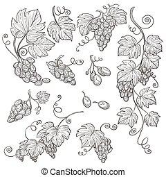 winnica, żniwa, odizolowany, winogrono, szkice, winemaking,...
