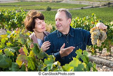 wino, dorośnięty-do góry, starszy, winogrona, żona, ...