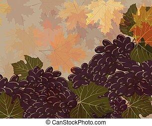 winogrona, clustters, odizolowany