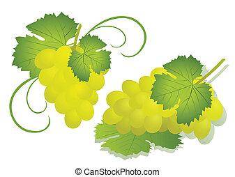 winogrono, -, odizolowany, ilustracja, wektor, biały